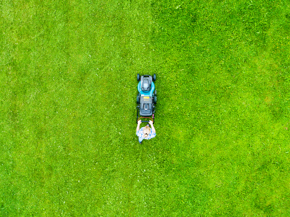 The Grass is Greener on My Side: the Perfect Lawn