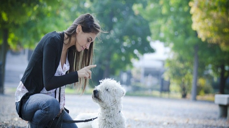 A Guide To Choosing A Professional Dog Trainer