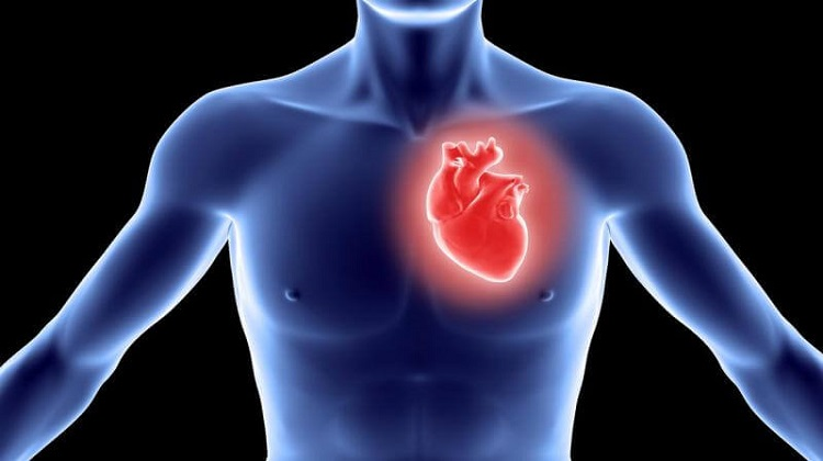 The Workings of the Miracle Organ – The Heart