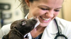Get Medical Care for Your Pet From Home